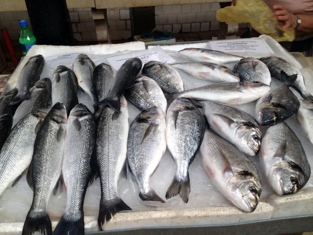 kroatien-fisk